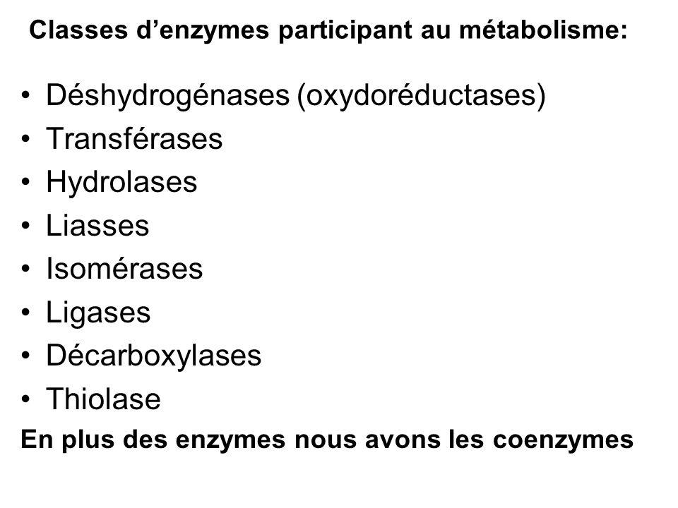 Classes denzymes participant au métabolisme: Déshydrogénases (oxydoréductases) Transférases Hydrolases Liasses Isomérases Ligases Décarboxylases Thiol