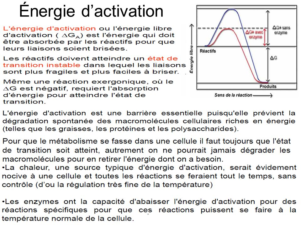Énergie dactivation