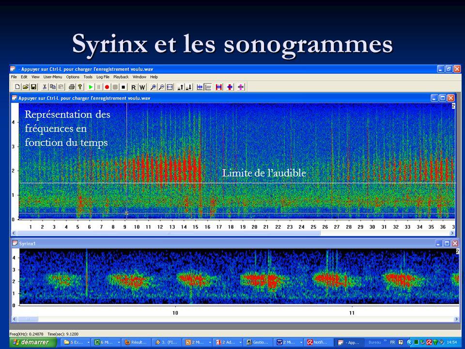 Syrinx et les sonogrammes Représentation des fréquences en fonction du temps Limite de laudible