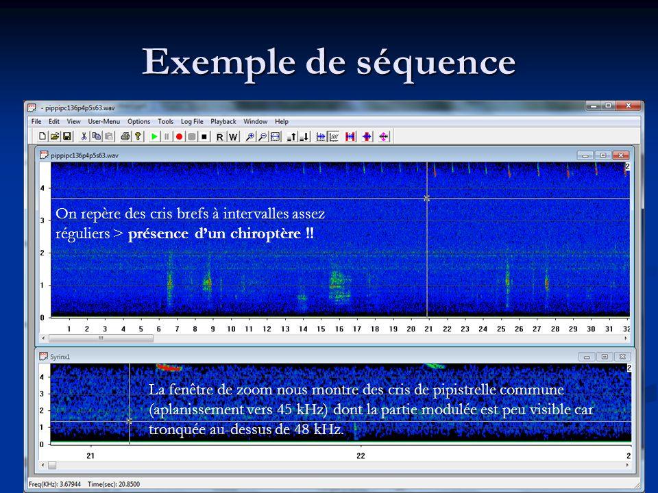 Exemple de séquence On repère des cris brefs à intervalles assez réguliers > présence dun chiroptère !! La fenêtre de zoom nous montre des cris de pip