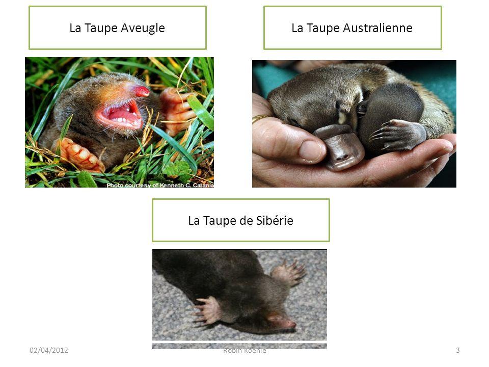 4Robin Koehle02/04/2012 Quelques Informations Peut-on voir des taupes se promener dans la nature .