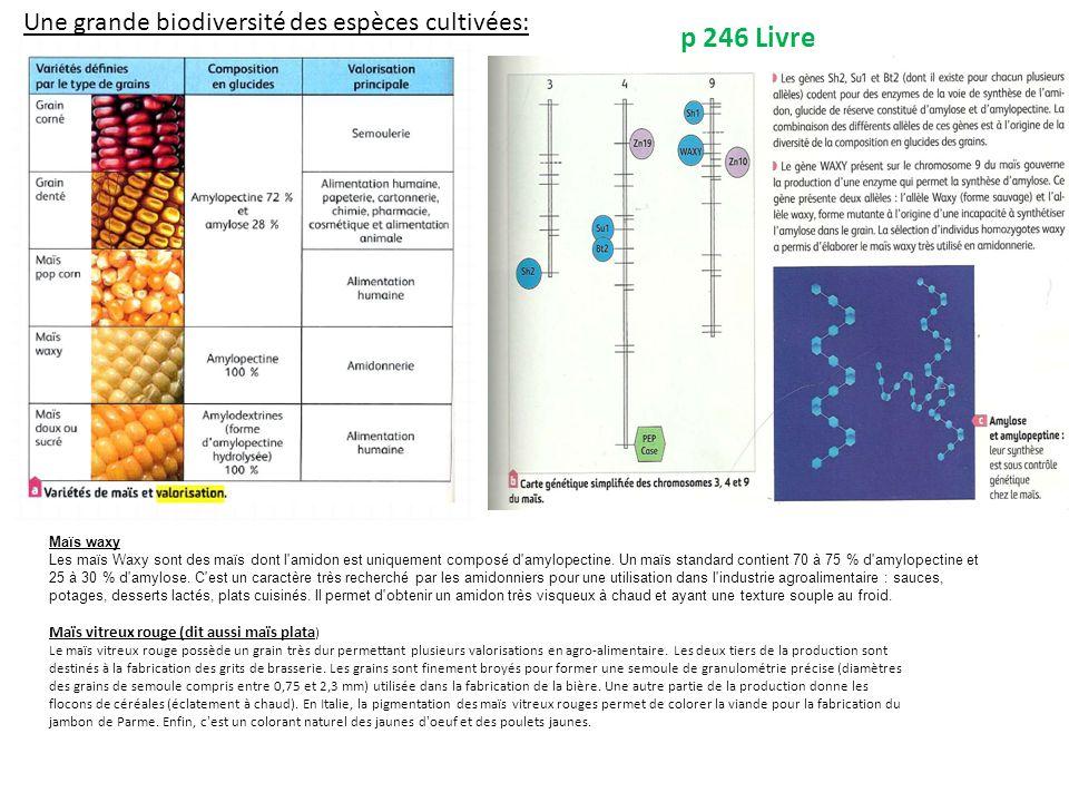 Une grande biodiversité des espèces cultivées: p 246 Livre Maïs waxy Les maïs Waxy sont des maïs dont l amidon est uniquement composé d amylopectine.