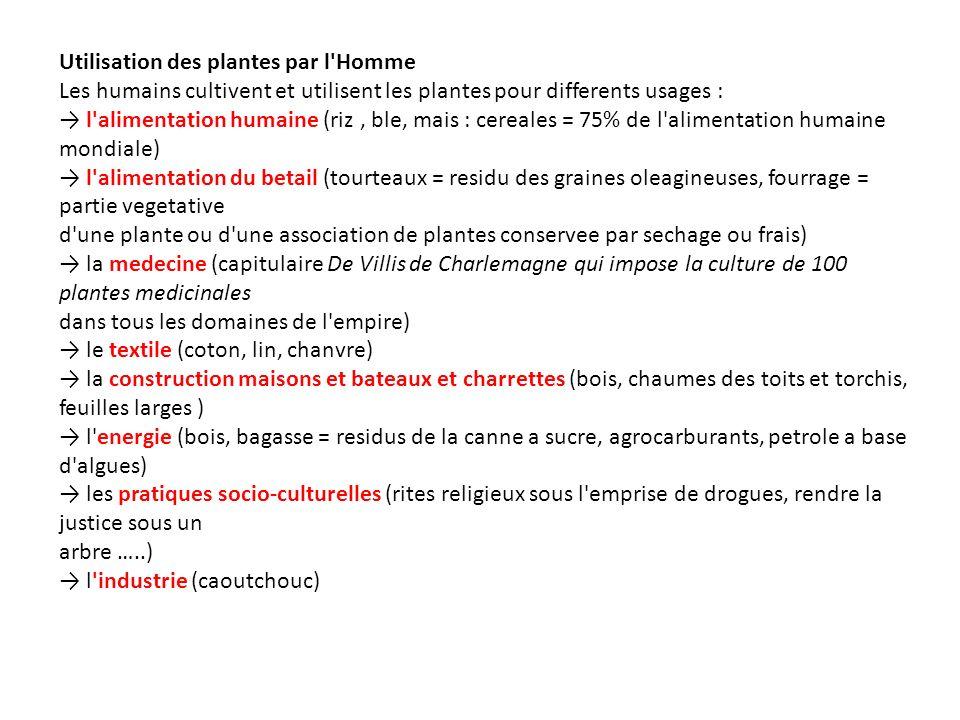 Utilisation des plantes par l'Homme Les humains cultivent et utilisent les plantes pour differents usages : l'alimentation humaine (riz, ble, mais : c