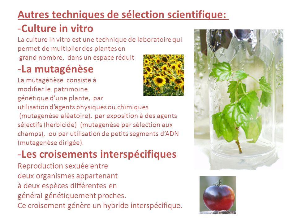 Autres techniques de sélection scientifique: -Culture in vitro La culture in vitro est une technique de laboratoire qui permet de multiplier des plantes en grand nombre, dans un espace réduit -La mutagénèse La mutagénèse consiste à modifier le patrimoine génétique dune plante, par utilisation dagents physiques ou chimiques (mutagenèse aléatoire), par exposition à des agents sélectifs (herbicide) (mutagenèse par sélection aux champs), ou par utilisation de petits segments dADN (mutagenèse dirigée).