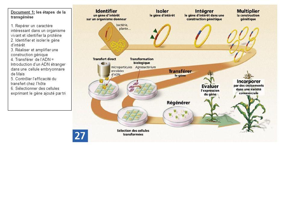 Document 1: les étapes de la transgénèse 1. Repérer un caractère intéressant dans un organisme vivant et identifier la protéine 2. Identifier et isole