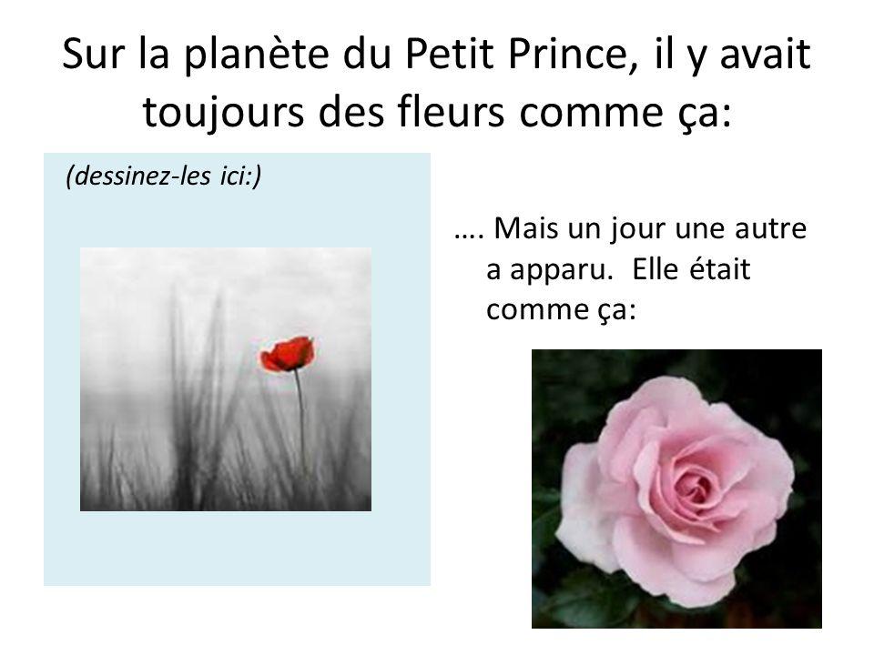 Sur la planète du Petit Prince, il y avait toujours des fleurs comme ça: (dessinez-les ici:) …. Mais un jour une autre a apparu. Elle était comme ça: