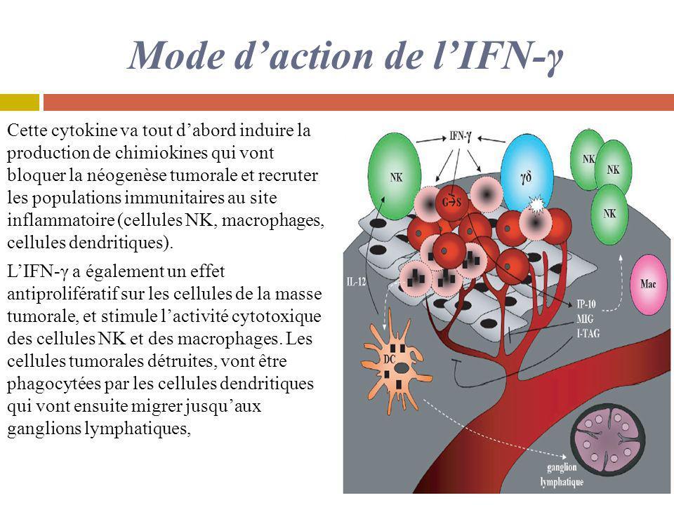 Mode daction de lIFN-γ Cette cytokine va tout dabord induire la production de chimiokines qui vont bloquer la néogenèse tumorale et recruter les popul