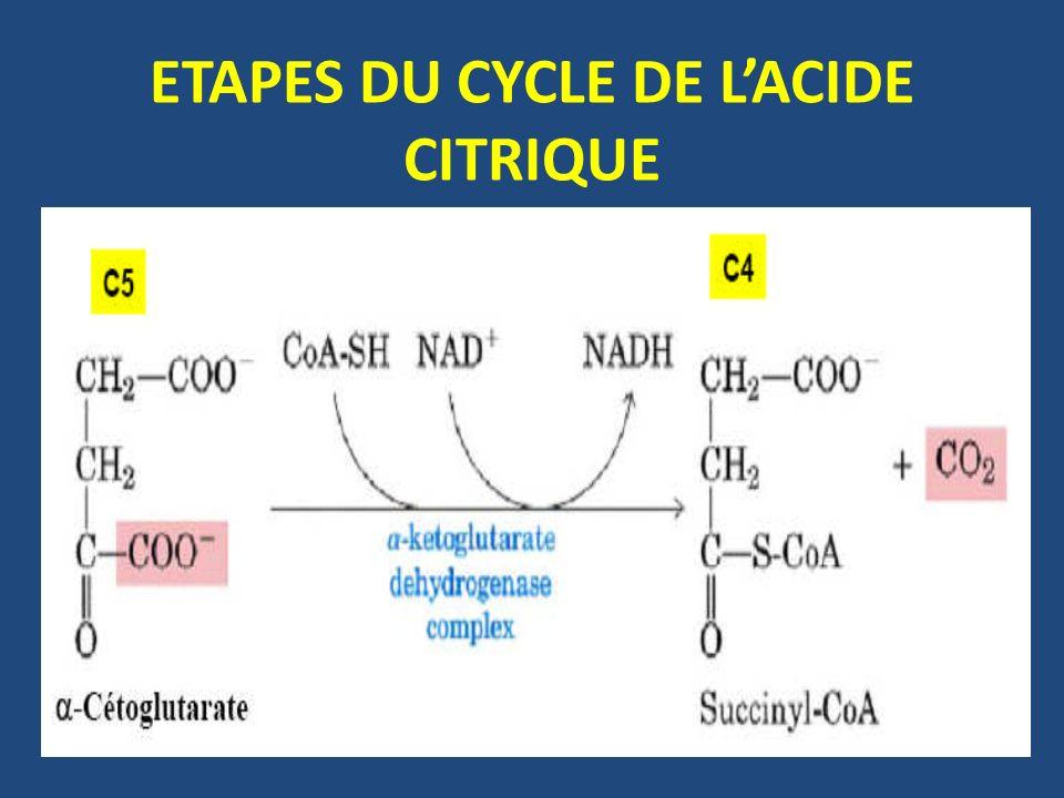 ETAPES DU CYCLE DE LACIDE CITRIQUE