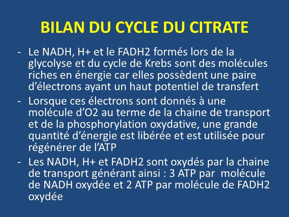 BILAN DU CYCLE DU CITRATE -Le NADH, H+ et le FADH2 formés lors de la glycolyse et du cycle de Krebs sont des molécules riches en énergie car elles pos