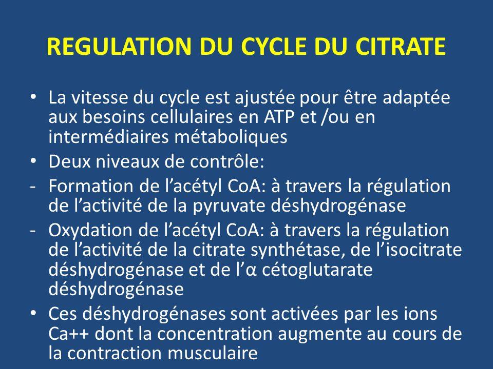 REGULATION DU CYCLE DU CITRATE La vitesse du cycle est ajustée pour être adaptée aux besoins cellulaires en ATP et /ou en intermédiaires métaboliques
