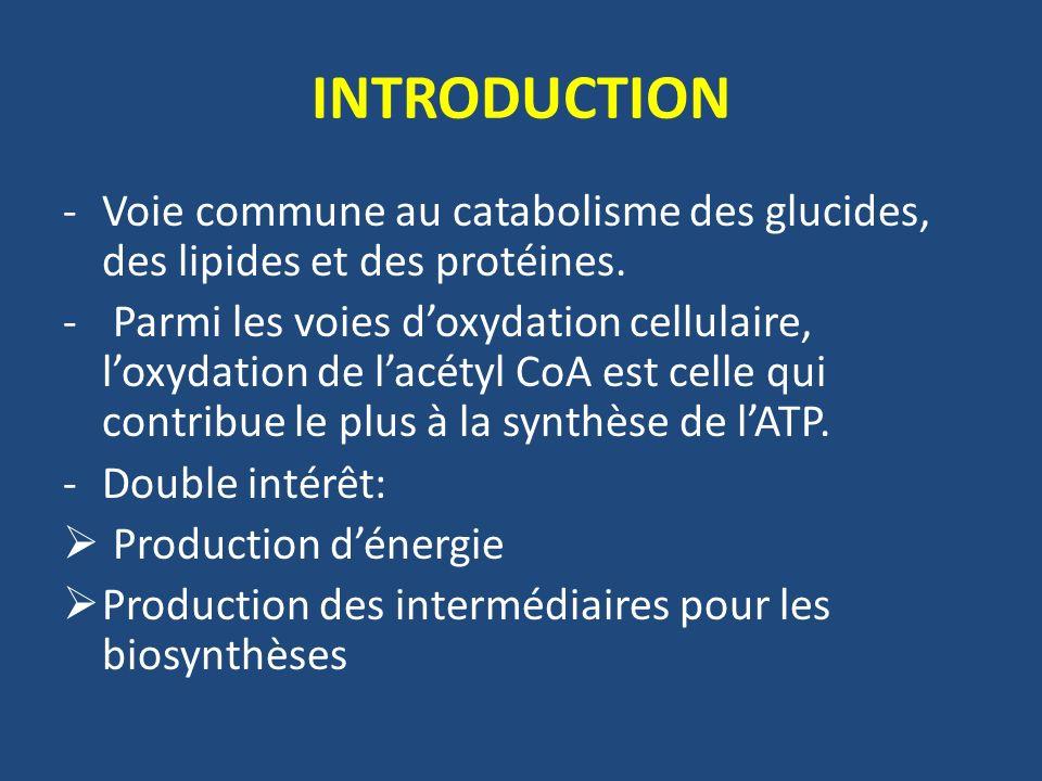INTRODUCTION -Voie commune au catabolisme des glucides, des lipides et des protéines. - Parmi les voies doxydation cellulaire, loxydation de lacétyl C