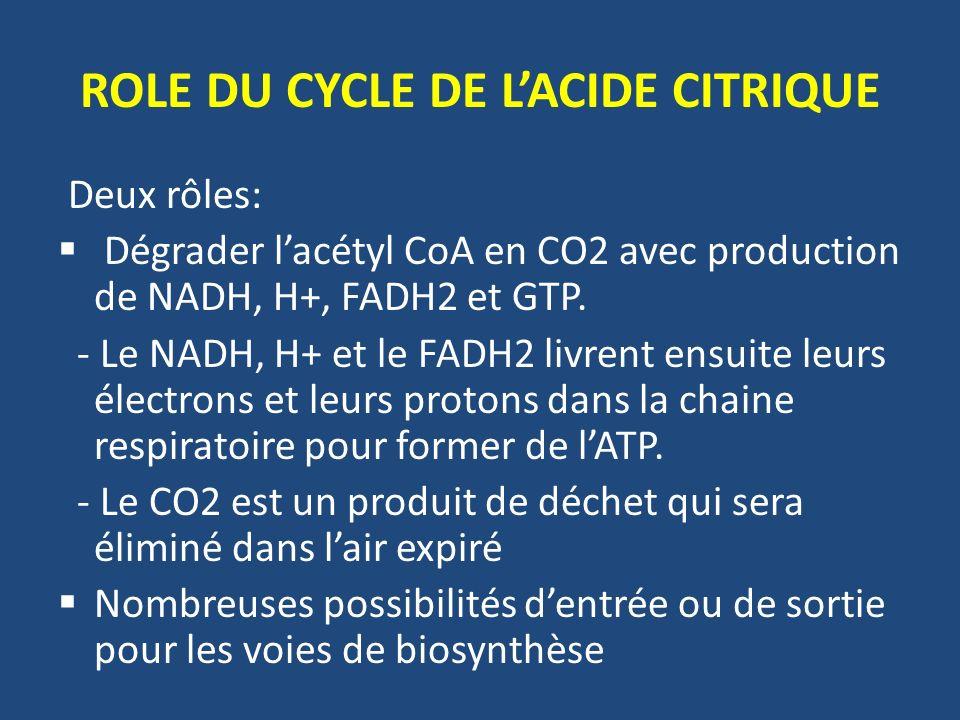 ROLE DU CYCLE DE LACIDE CITRIQUE Deux rôles: Dégrader lacétyl CoA en CO2 avec production de NADH, H+, FADH2 et GTP. - Le NADH, H+ et le FADH2 livrent