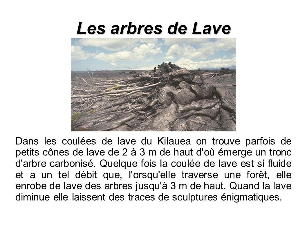 Les arbres de Lave Dans les coulées de lave du Kilauea on trouve parfois de petits cônes de lave de 2 à 3 m de haut d où émerge un tronc d arbre carbonisé.