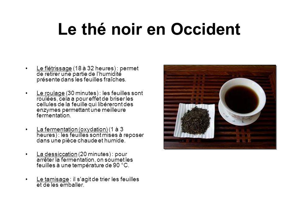 Le thé noir en Occident Le flétrissage (18 à 32 heures) : permet de retirer une partie de l humidité présente dans les feuilles fraîches.