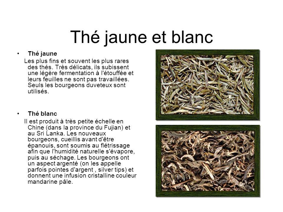 Thé jaune et blanc Thé jaune Les plus fins et souvent les plus rares des thés.