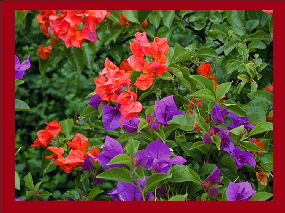 La vieille dame sourit: « As-tu remarqué quil y a des fleurs sur ton coté du chemin, et quil ny en a pas de lautre côté ? Jai toujours su à propos de
