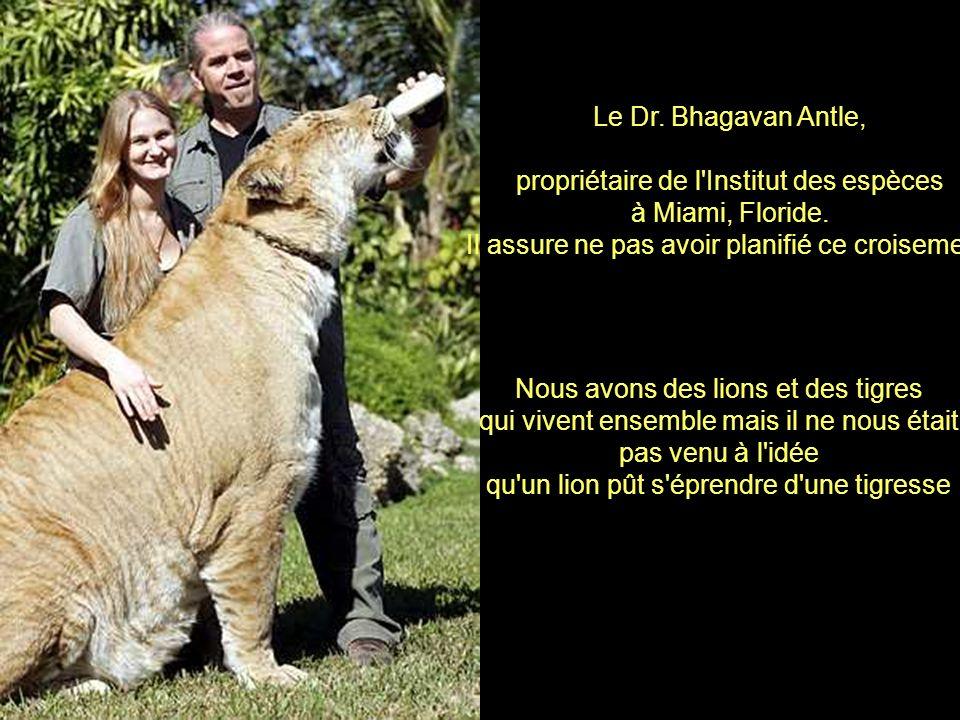 Dans la Nature, il est presque impossible que les lions et les tigres s'accouplent entre eux, car la majorité des lions habitent en Afrique et la majo