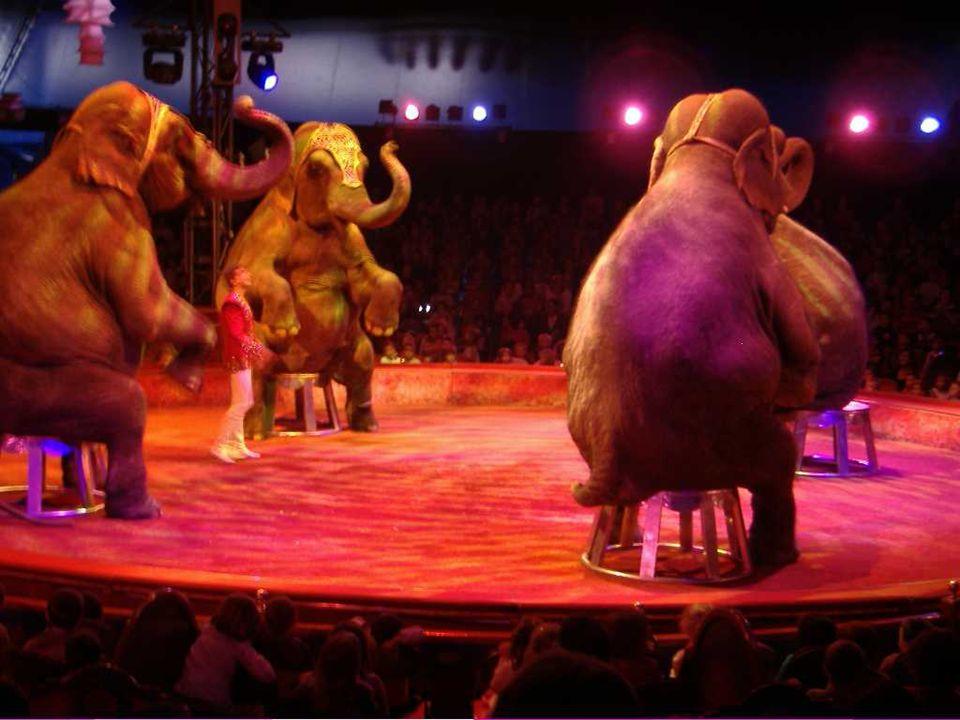 « Ce qui ma fait peur, ce sont les éléphants lorsquils étaient debout sur un tabouret. » (Jade)