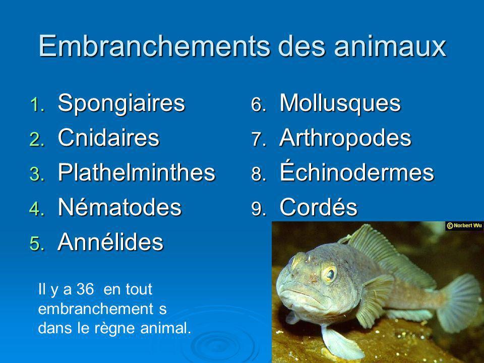 Embranchements des animaux 1. Spongiaires 2. Cnidaires 3. Plathelminthes 4. Nématodes 5. Annélides 6. Mollusques 7. Arthropodes 8. Échinodermes 9. Cor