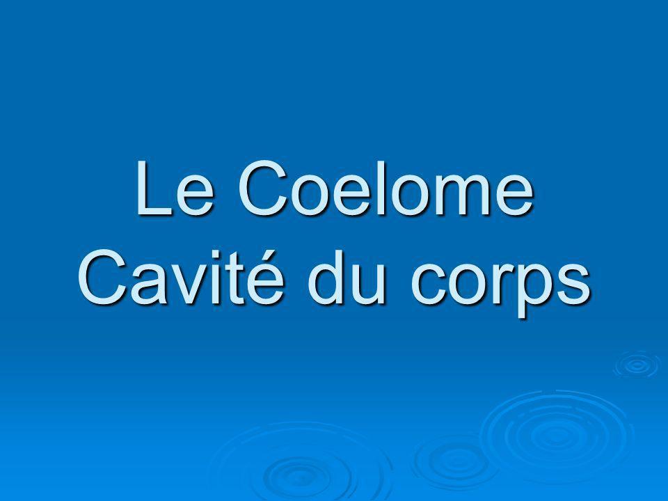 Le Coelome Cavité du corps