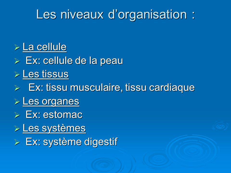 Les niveaux dorganisation : La cellule La cellule Ex: cellule de la peau Ex: cellule de la peau Les tissus Les tissus Ex: tissu musculaire, tissu card