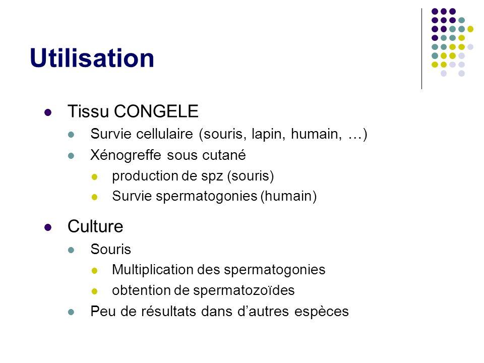 Utilisation Tissu CONGELE Survie cellulaire (souris, lapin, humain, …) Xénogreffe sous cutané production de spz (souris) Survie spermatogonies (humain