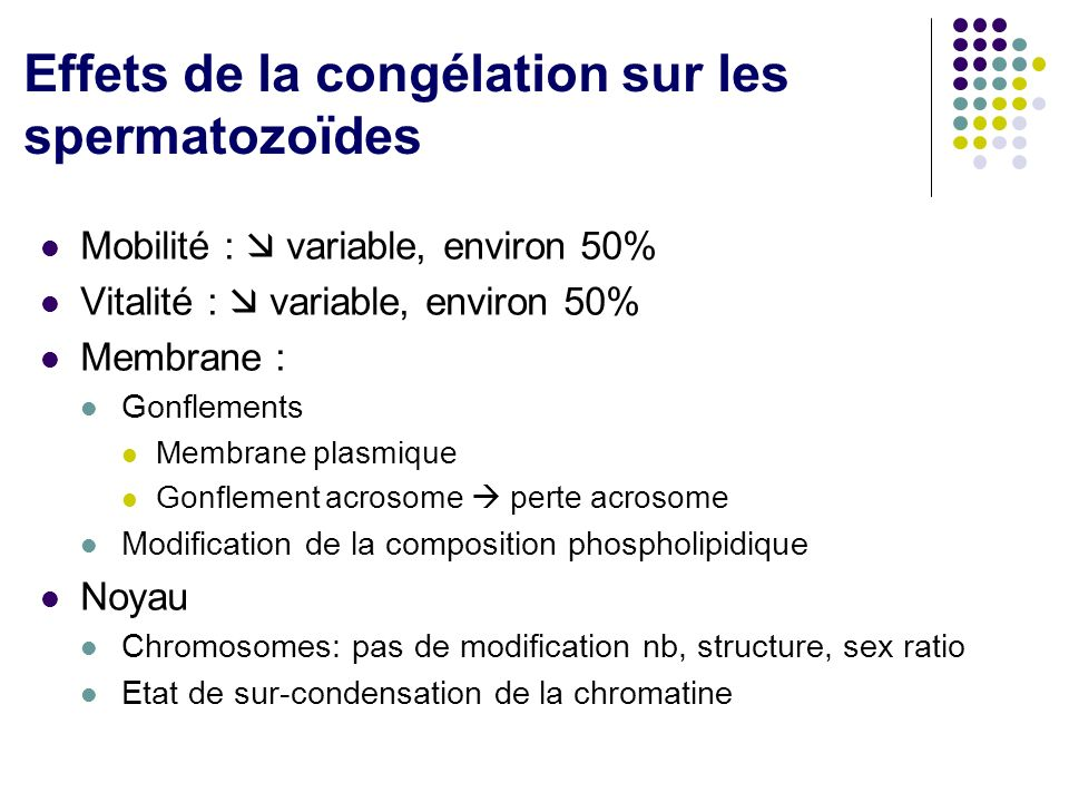 Effets de la congélation sur les spermatozoïdes Mobilité : variable, environ 50% Vitalité : variable, environ 50% Membrane : Gonflements Membrane plasmique Gonflement acrosome perte acrosome Modification de la composition phospholipidique Noyau Chromosomes: pas de modification nb, structure, sex ratio Etat de sur-condensation de la chromatine
