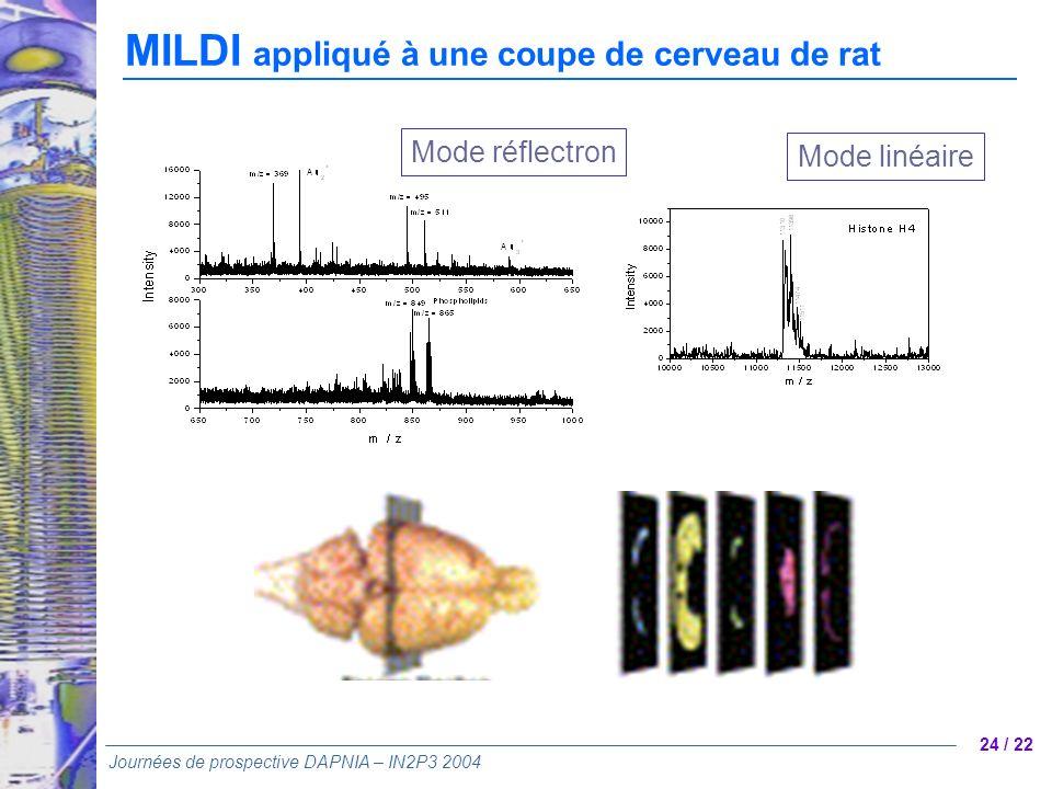 24 / 22 Journées de prospective DAPNIA – IN2P3 2004 Mode réflectron Mode linéaire MILDI appliqué à une coupe de cerveau de rat