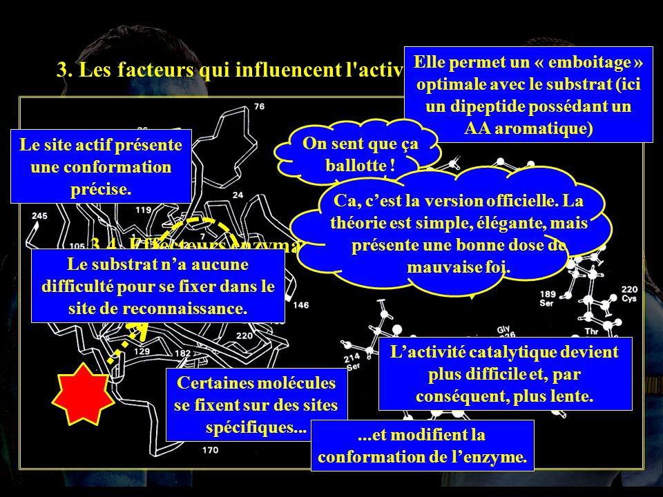 3. Les facteurs qui influencent l'activité enzymatique. 3.4. Effecteurs enzymatiques. * 3.4.1. I.N.C. Le site actif présente une conformation précise.