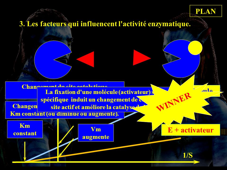 E seuleE + activateur Km constant 3. Les facteurs qui influencent l'activité enzymatique. 3.4. Effecteurs enzymatiques. * 3.4.3. Activateur. 1/S 1/Vi