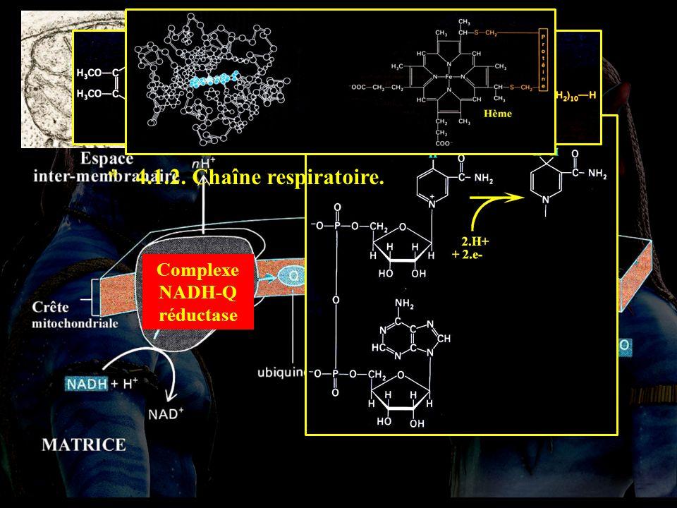 4.1.2 Complexe NADH-Q réductase Complexe QH 2 -cytc réductase Complexe cytc oxydase * 4.1.2. Chaîne respiratoire.