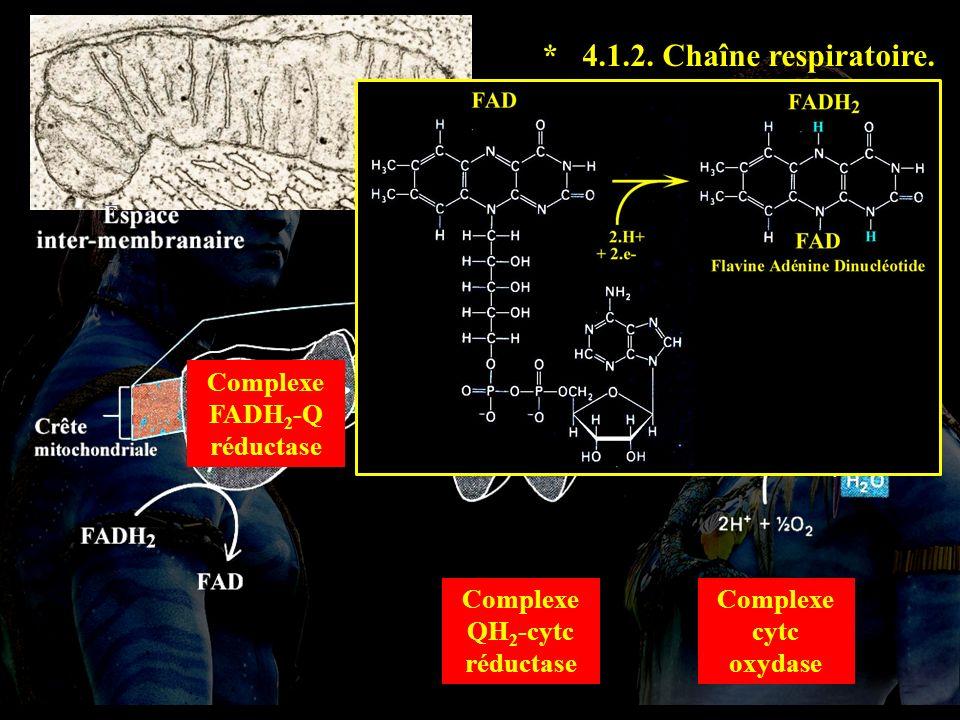 4.1.2 suite Complexe FADH 2 -Q réductase Complexe QH 2 -cytc réductase Complexe cytc oxydase * 4.1.2.