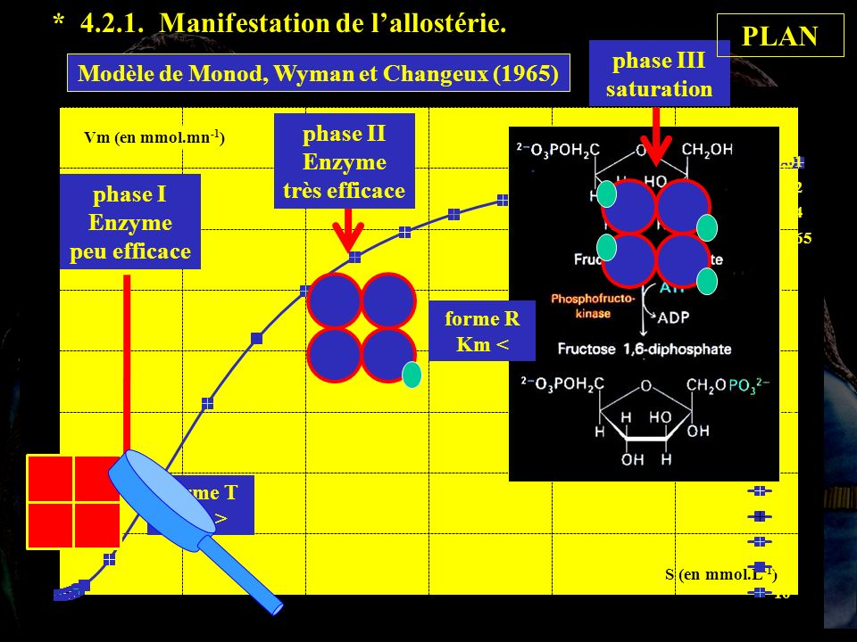 phase I Enzyme peu efficace phase II Enzyme très efficace phase III saturation forme T Km > forme R Km < PLAN * 4.2.1.