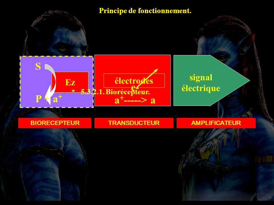 5.3.2.1 Montage BIORECEPTEUR Ez S P + a + TRANSDUCTEUR électrodes e- a + -----> a signal électrique AMPLIFICATEUR * 5.3.2.1. Biorécepteur. Principe de