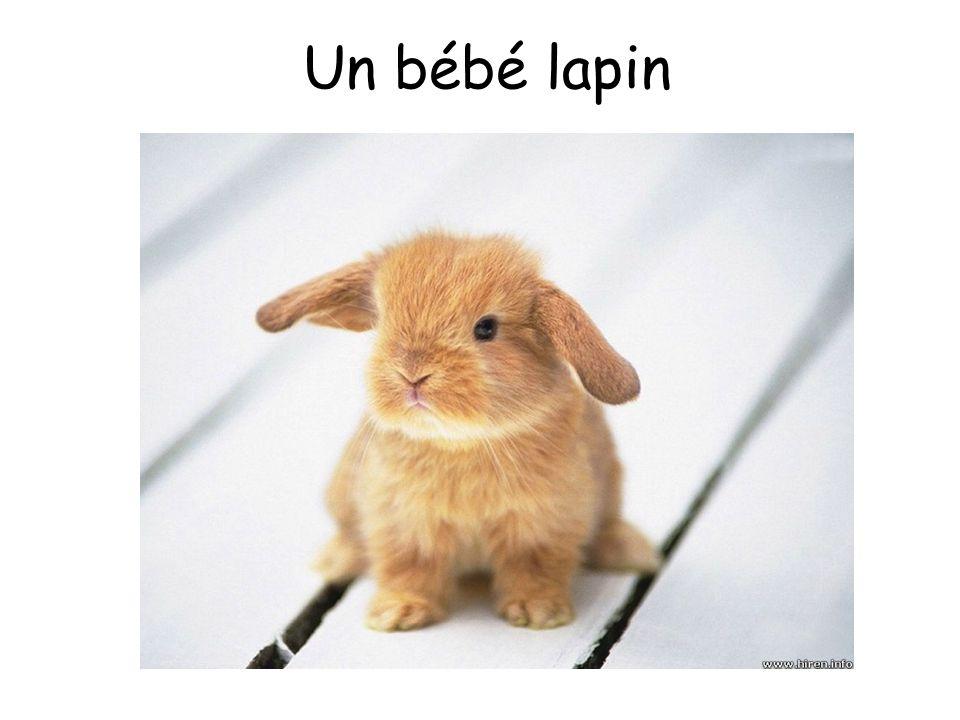 Un bébé lapin