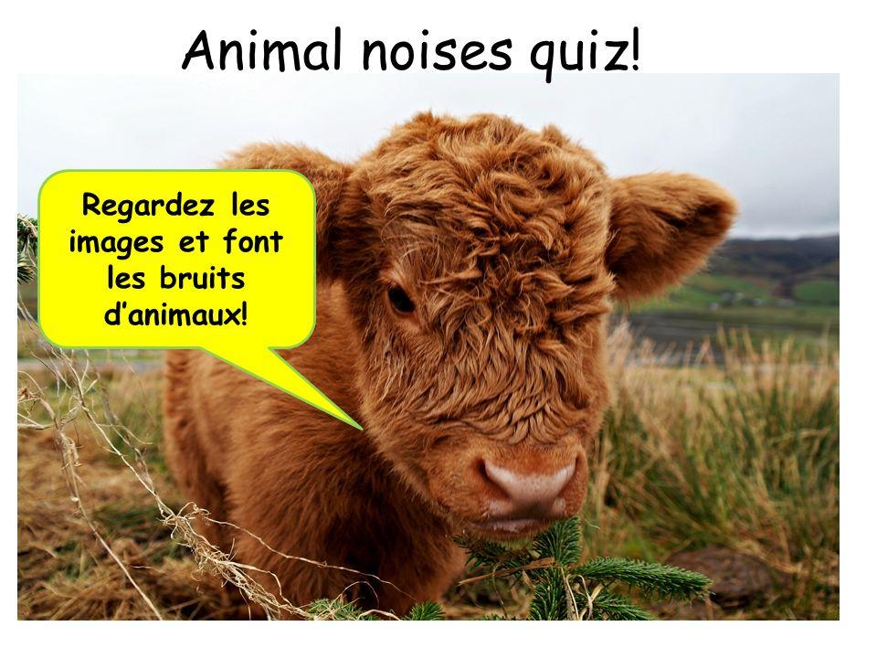 Animal noises quiz! Regardez les images et font les bruits danimaux!