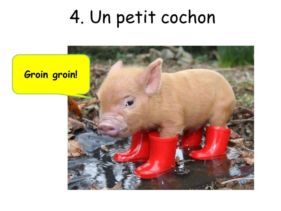 4. Un petit cochon Groin groin!