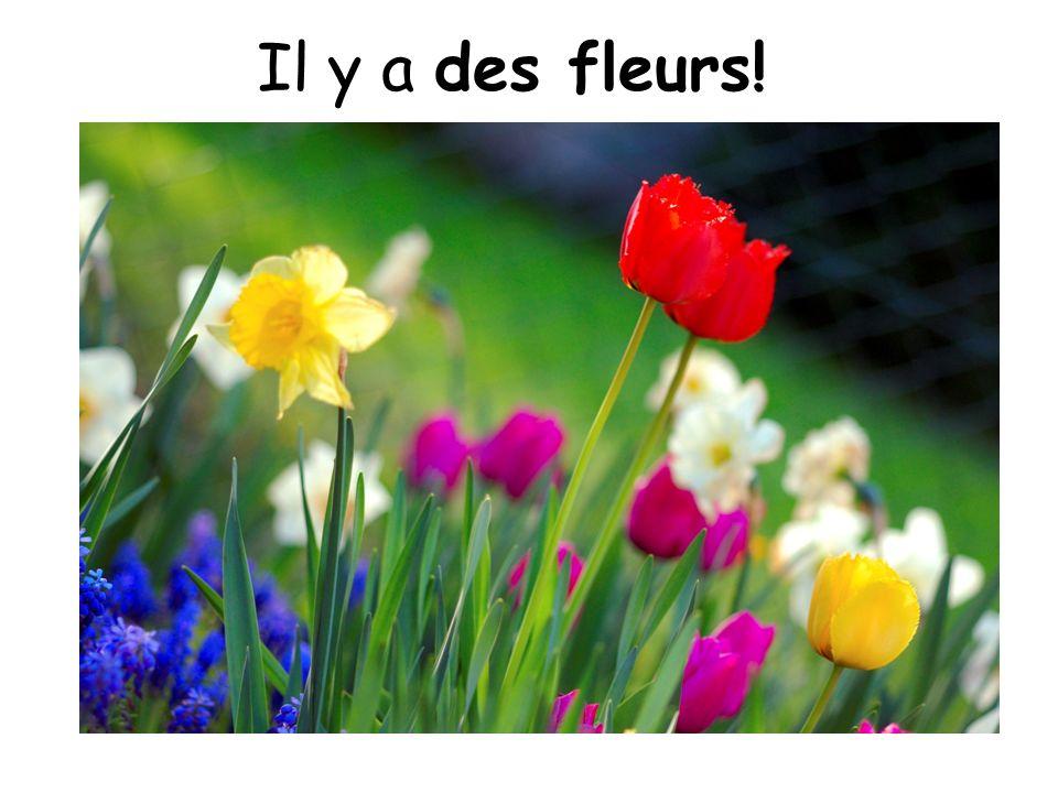 Il y a des fleurs!
