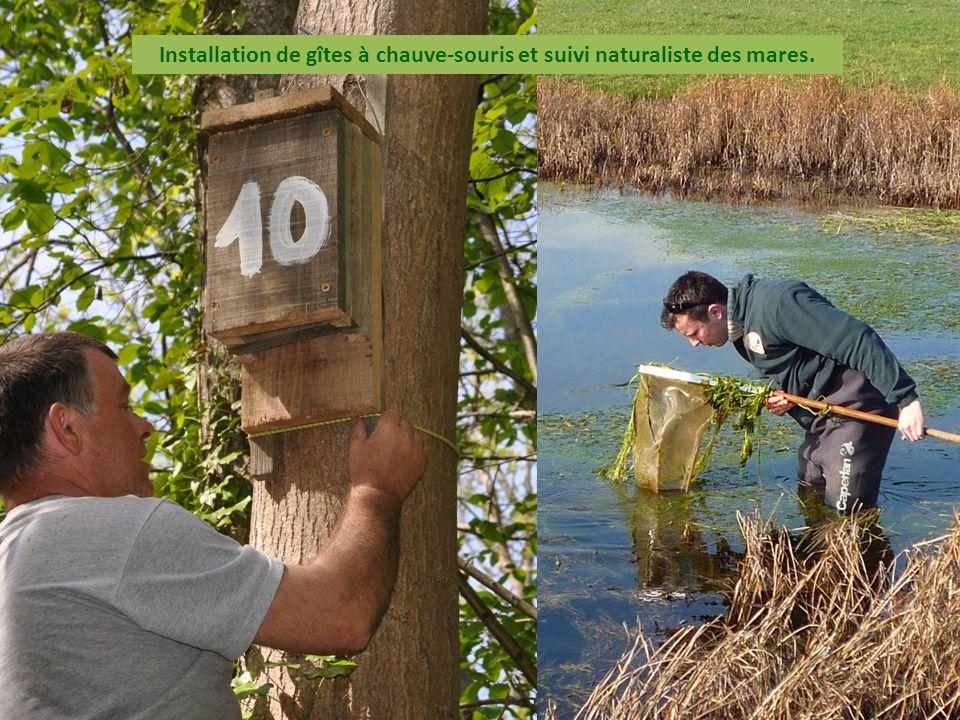 Installation de gîtes à chauve-souris et suivi naturaliste des mares.
