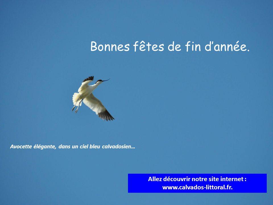 Allez découvrir notre site internet : www.calvados-littoral.fr. Avocette élégante, dans un ciel bleu calvadosien… Bonnes fêtes de fin dannée.