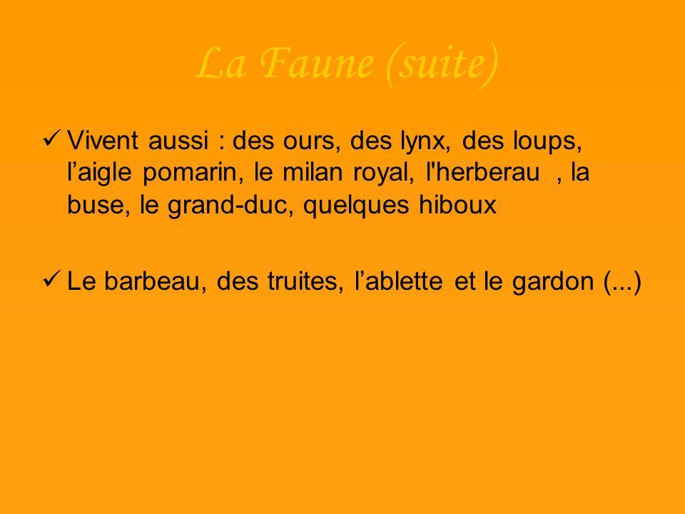 La Faune (suite) Vivent aussi : des ours, des lynx, des loups, laigle pomarin, le milan royal, l'herberau, la buse, le grand-duc, quelques hiboux Le b