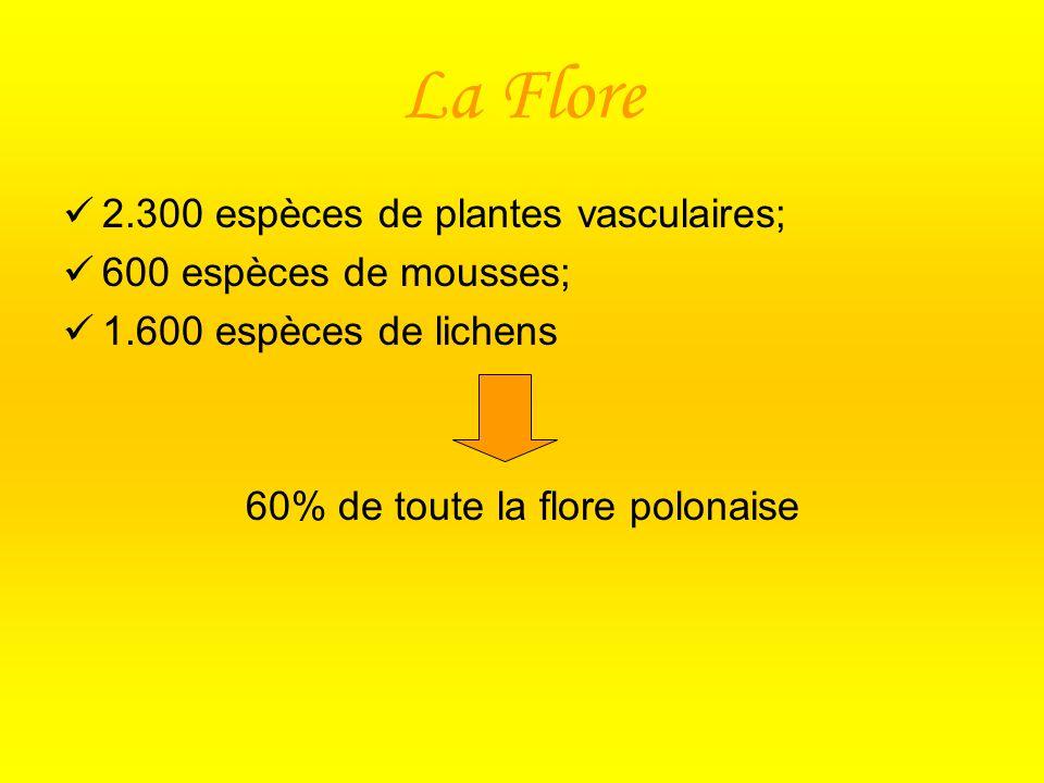 La Flore 2.300 espèces de plantes vasculaires; 600 espèces de mousses; 1.600 espèces de lichens 60% de toute la flore polonaise