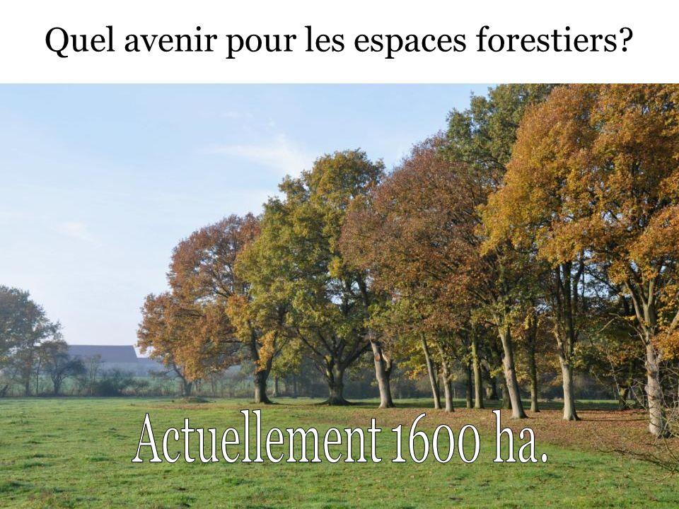 Quel avenir pour les espaces forestiers