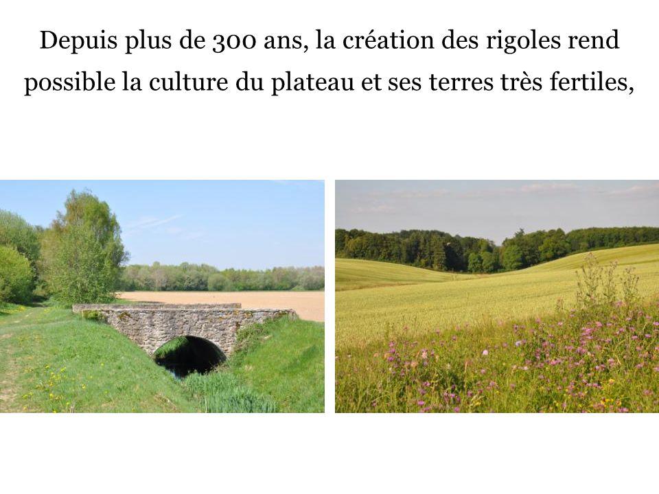 Depuis plus de 300 ans, la création des rigoles rend possible la culture du plateau et ses terres très fertiles,