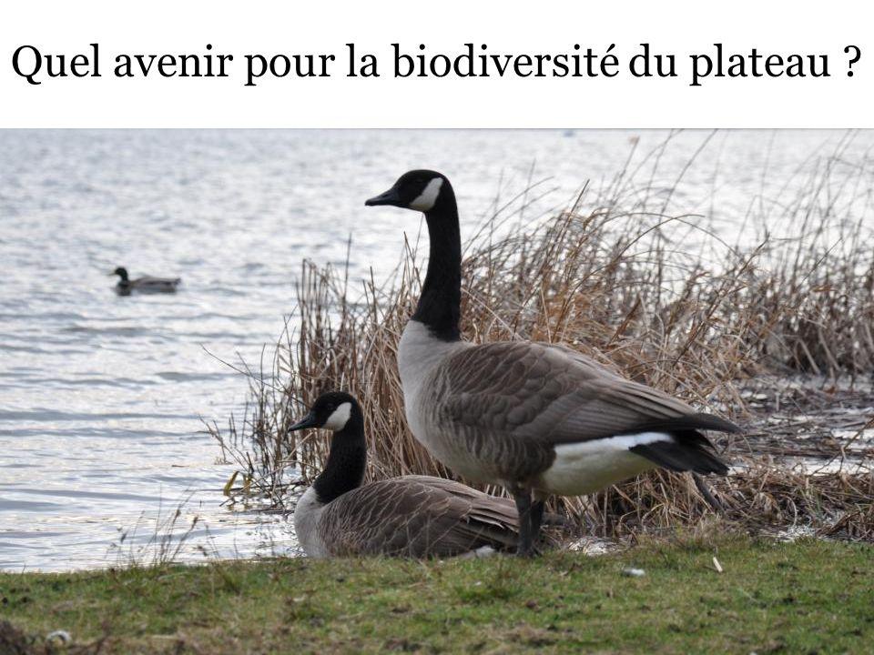 Quel avenir pour la biodiversité du plateau