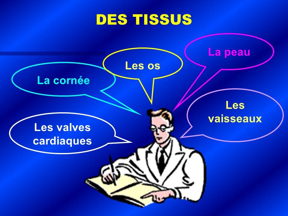 La cornée Les os La peau Les vaisseaux Les valves cardiaques DES TISSUS