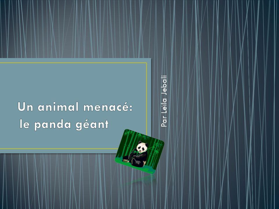 Carte didentité Nom: Panda géant Habitat: Dispersé en Chine Durance de vie: 20 ans Taille: 1.50m Poids: 160kg Nourritures: En particulier des pousses de bambou Carte didentité Nom: Panda géant Habitat: Dispersé en Chine Durance de vie: 20 ans Taille: 1.50m Poids: 160kg Nourritures: En particulier des pousses de bambou