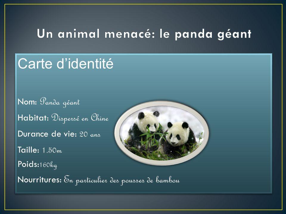 Carte didentité Nom: Panda géant Habitat: Dispersé en Chine Durance de vie: 20 ans Taille: 1.50m Poids: 160kg Nourritures: En particulier des pousses