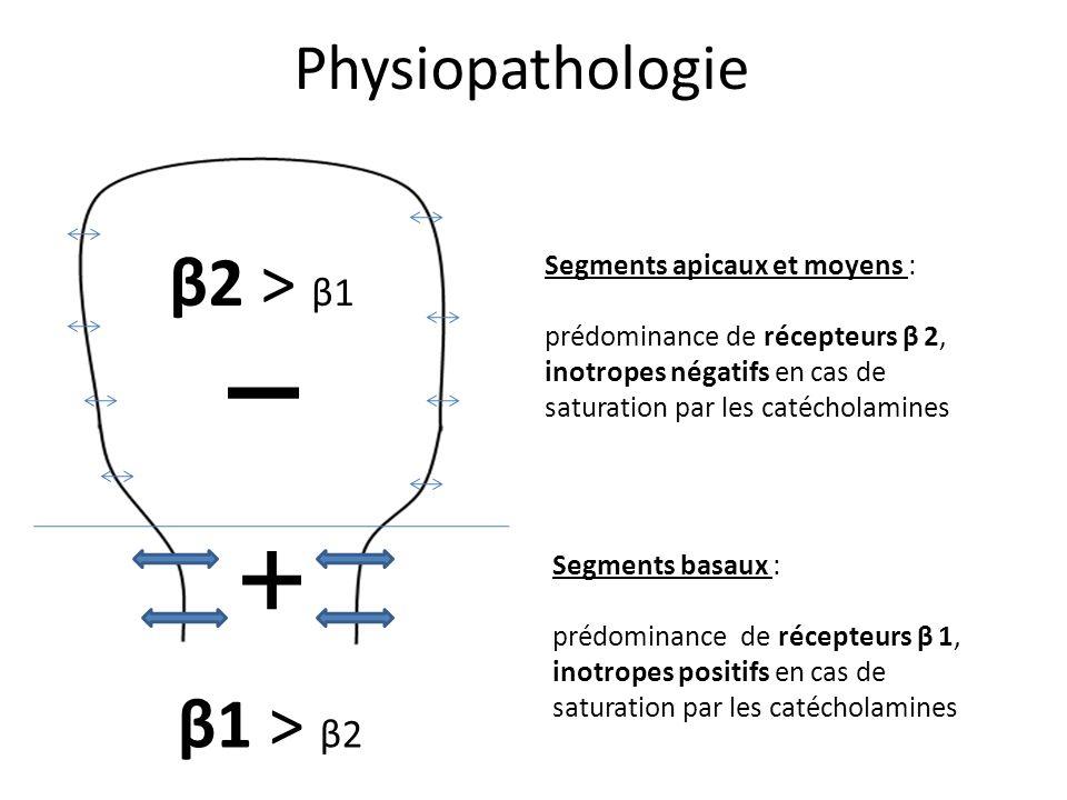 Physiopathologie Segments apicaux et moyens : prédominance de récepteurs β 2, inotropes négatifs en cas de saturation par les catécholamines Segments