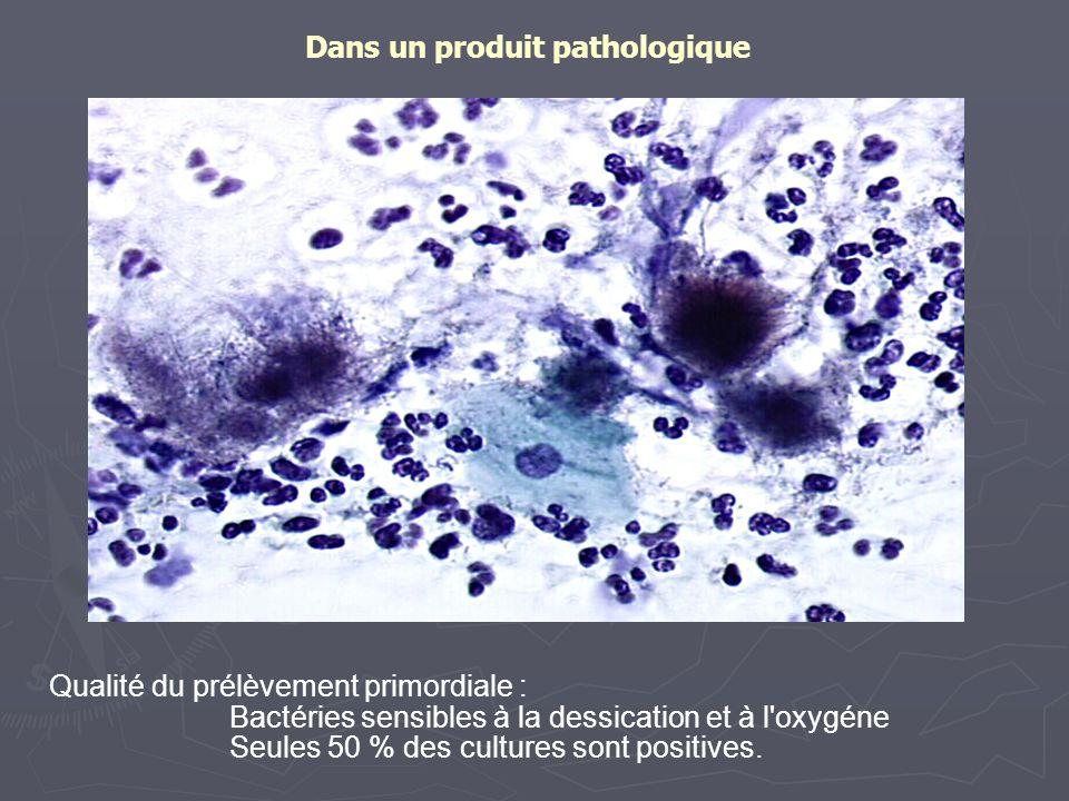 Dans un produit pathologique Qualité du prélèvement primordiale : Bactéries sensibles à la dessication et à l'oxygéne Seules 50 % des cultures sont po